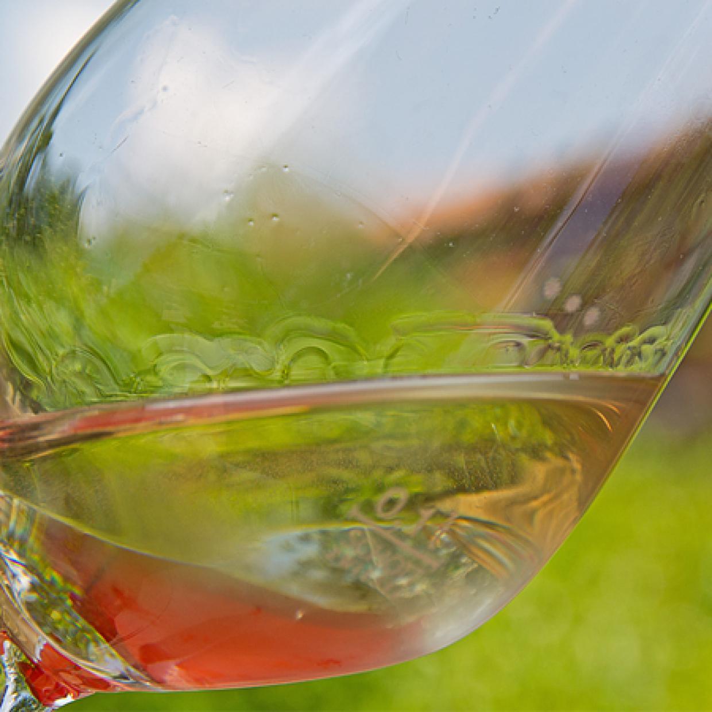 Weinanbau Weingut Otto Pfaffmann in der Pfalz
